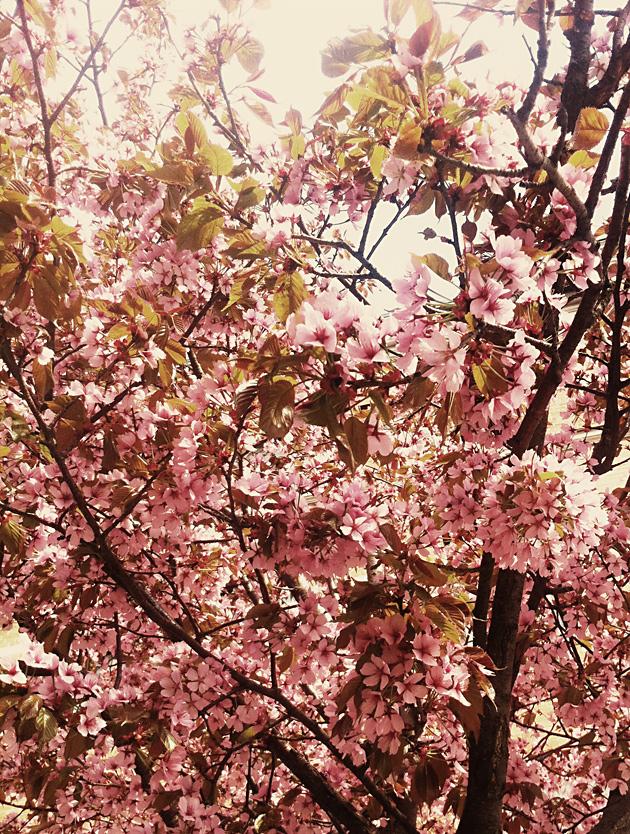 blomma, vintage, ljus, foto