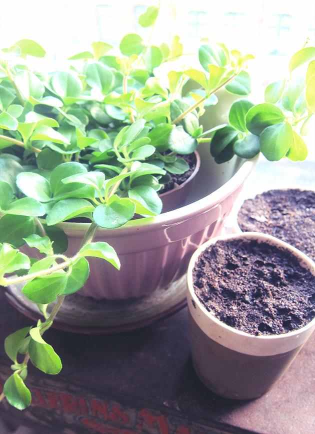 plantering, vår, hopp