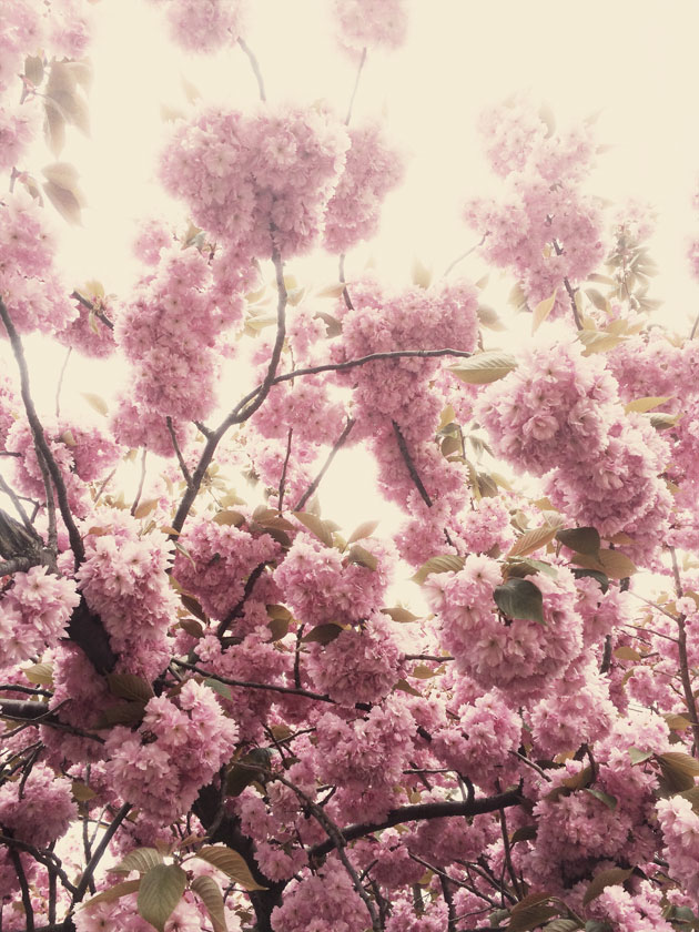 Bild med blommor